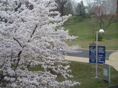 Blossoms at FSI